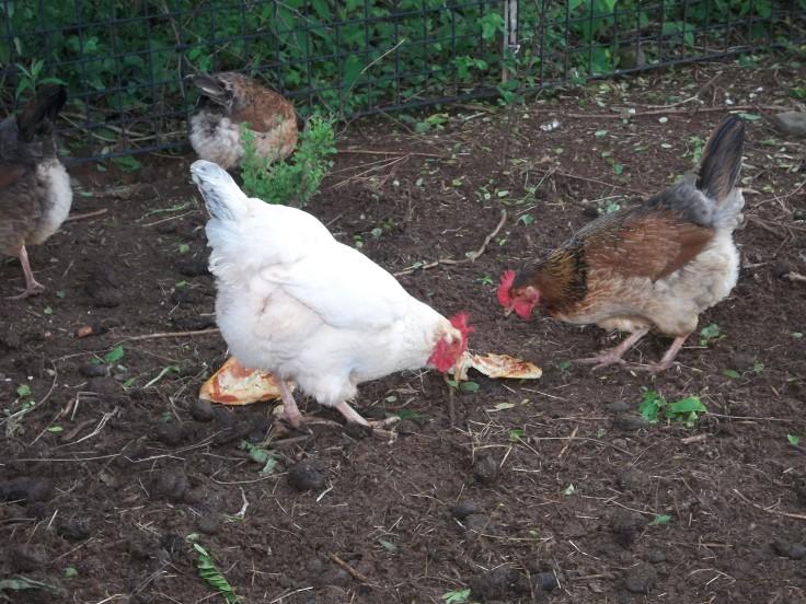 Henrietta and Marsha