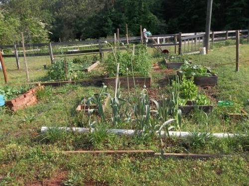 Spring garden 022 (1024x768)