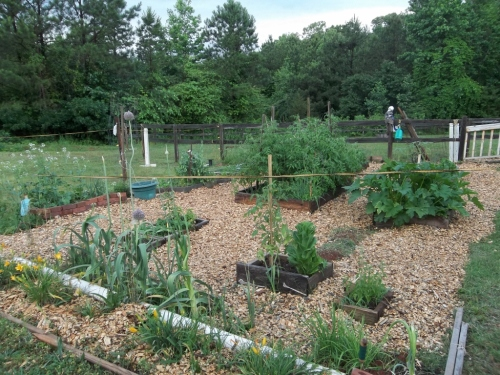 garden june 2 001 (1024x768)