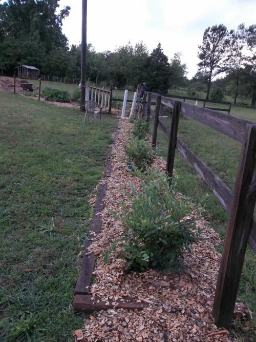 garden june 2 006 (768x1024)