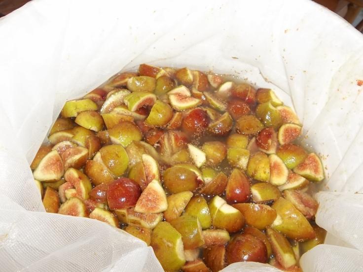 fig wine making 004 (1024x768)