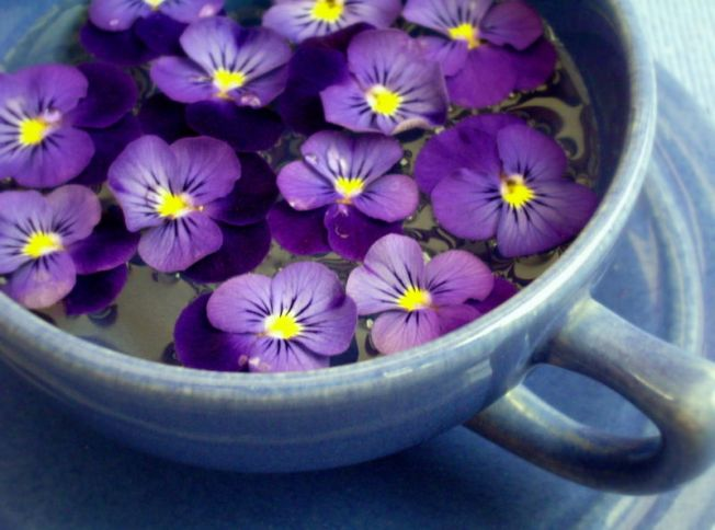 cup of violets