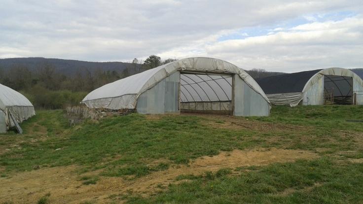 Hoop houses all over the farm
