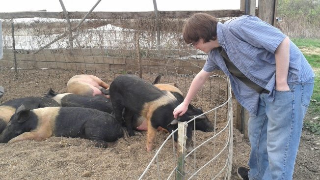 Jonathan and the medium piggies