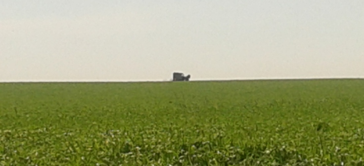 Amish buggy on the horizon