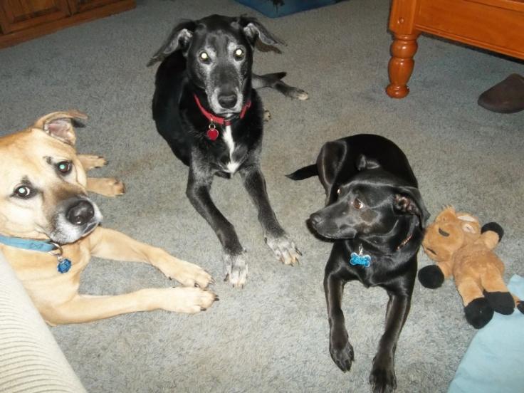 Doggie community