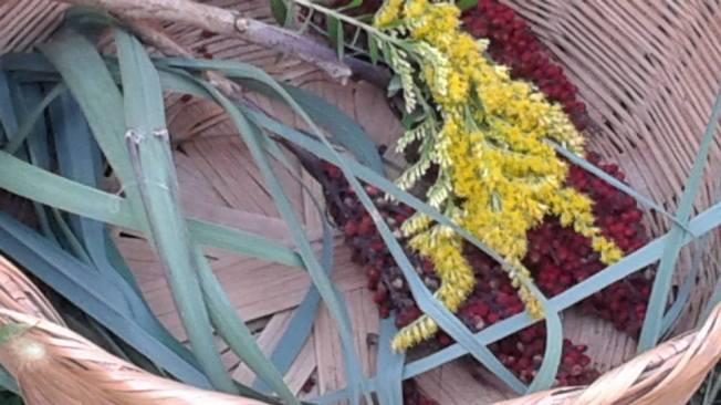 harvesting lemongrass, goldenrod and sumac