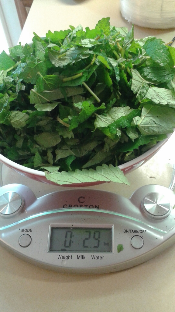 Weigh out your fresh lemon balm