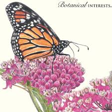 botanicalinterests butterfly weed