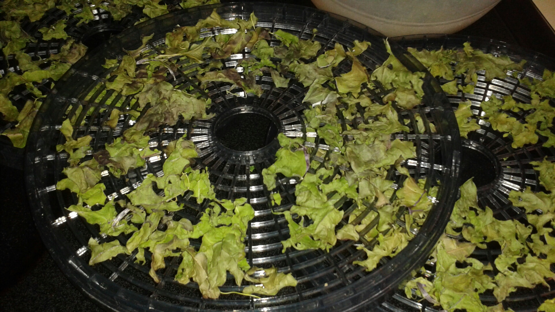 filled trays 1st round of dehydrating