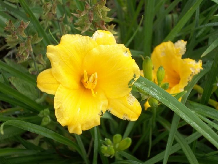 Spring garden 010 (1024x768)