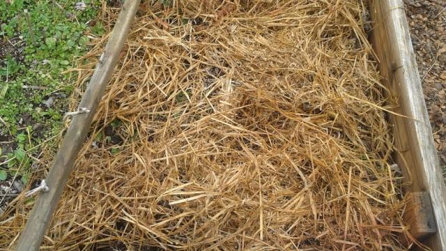 garden layer straw