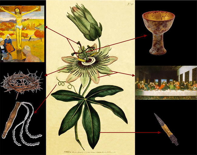 passionflower symbolism