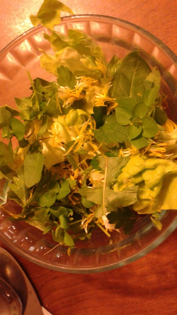 yummy salad with chickweed, dandelion leaves and flowers, purple dead nettle