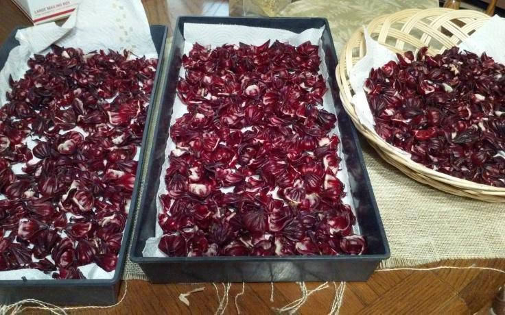 hibiscus-tray